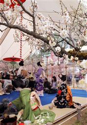 梅花祭でお茶を振舞う舞妓ら・京都市北野天満宮.jpg
